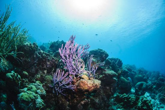 Bonaire's National Marine Park, first in the Caribbean
