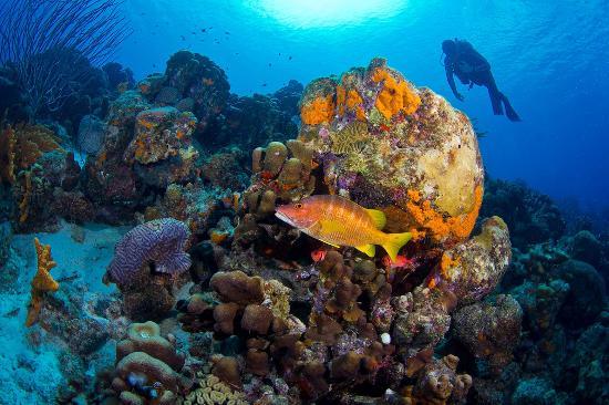 Bonaire, renown scuba diving destination