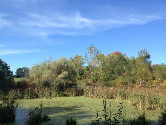 Wickham Park : Wetlaands garden