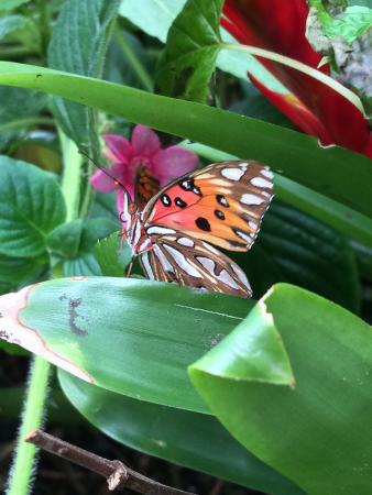 Butterfly house picture of cypress gardens moncks - Dow gardens butterfly house 2017 ...