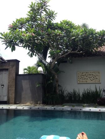 Pool - Amithya Coral Villa: .