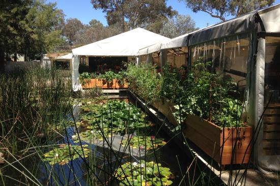 Sculpture Garden Resturant Canberra Restaurant Reviews