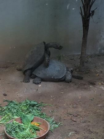 Dusit Zoo: :)