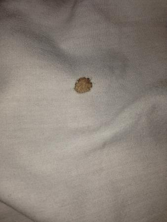Kiva Hotel Amarillo: Cigarette holes in bedding