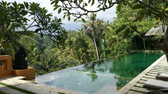 Infinity pool with jungle view picture of sunset hill for Infinity pool ubud