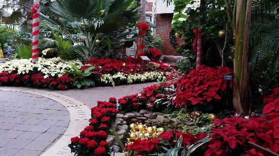 Buffalo And Erie County Botanical Gardens: One Holiday Display At The  Buffalo Botanical Gardens