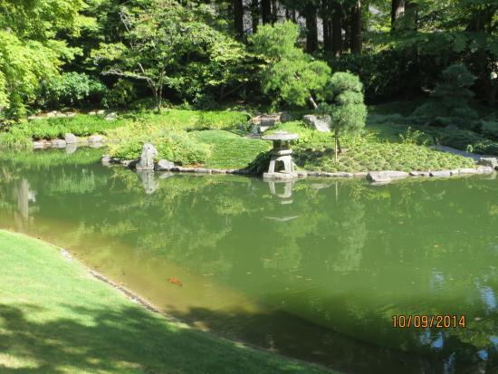Nitobe Memorial Garden: Koi