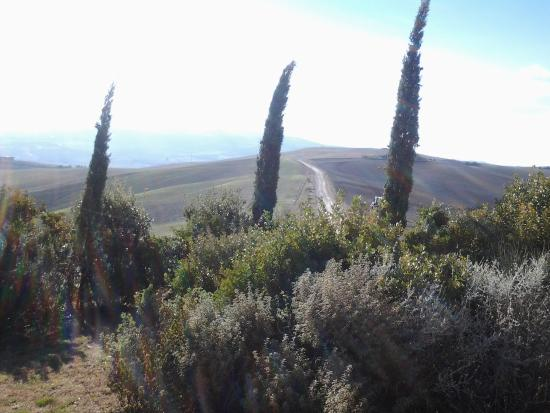 Agriturismo I Savelli: panorama