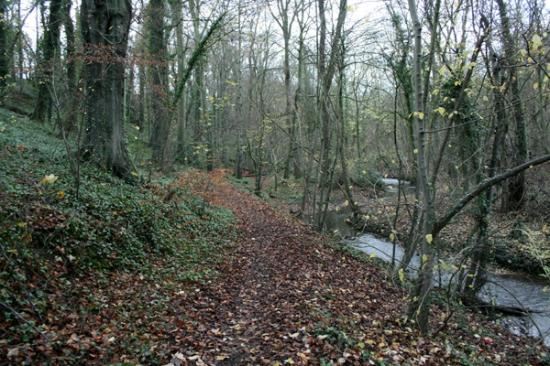 South Yorkshire, UK: Anston Brook
