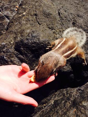 Caleta Dorada : Don't forget to feed the chipmunks down on the beach!