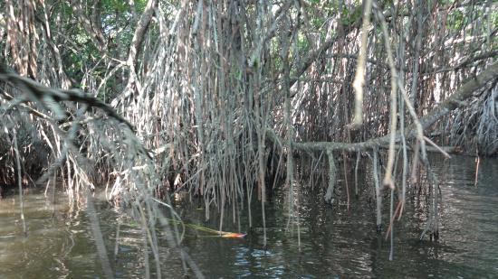 Dalmanuta Gardens - Ayurvedic Resort & Restaurant : Mangroveträsken