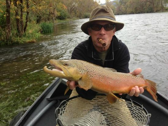 Big brown trout picture of high country angler fly for Trout fishing in tn