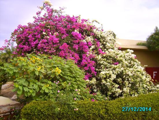 Fiore giardini rosa · foto gratis su pixabay