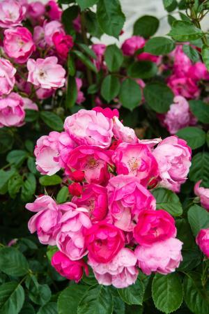 Plitvice Miric Inn: Flowers