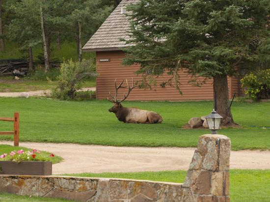Glacier Lodge: Our welcoming committee