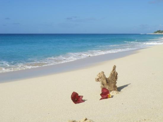 Oasis Creole: Magnifique plage de Baie longue à 3 mn de voiture