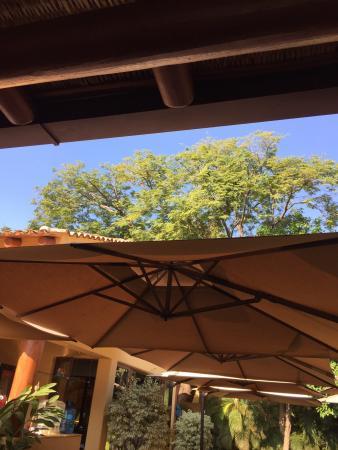 Las Margaritas: Beautiful trees