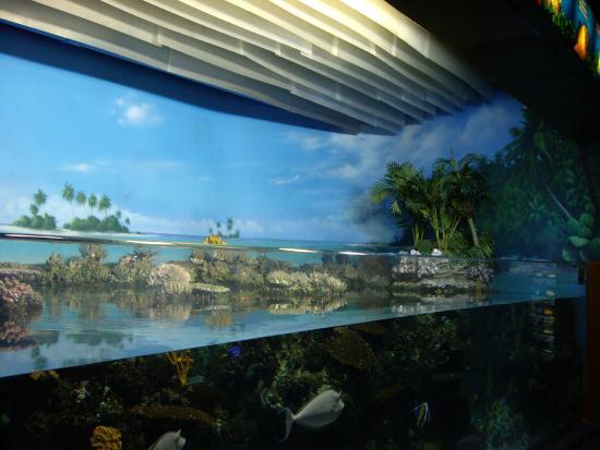 T Nel Picture Of L Aquarium De Barcelona Barcelona