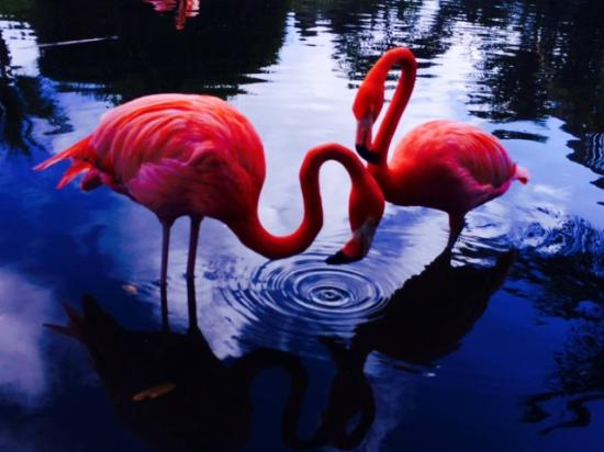 Excellence Punta Cana : Beautiful park filled with birds!
