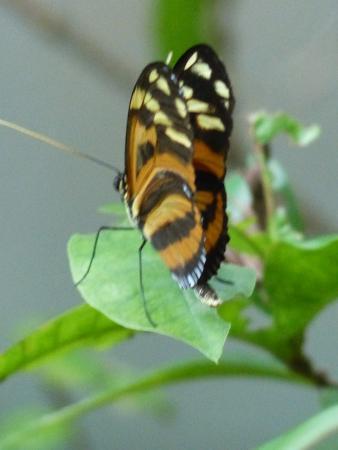 Butterfly Gardens: One of the few butterflies
