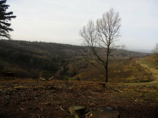 Hindhead Commons and the Devil's Punch Bowl: Devils Punch Bowl