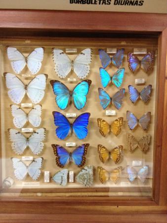 Museu Entomologico Fritz Plaumann