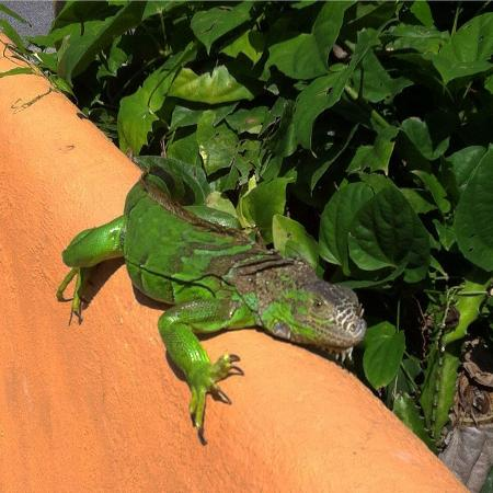 Arecas Suites Hotel: This guy came by to say farewell!