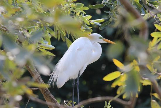 Jardin Botanico: bird