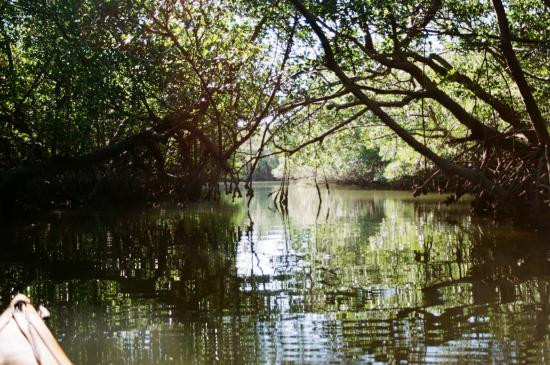 Everglades Kayak Company: Mangrove Tunnel