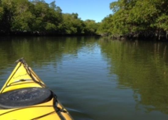 Everglades Kayak Company: Calm, Peaceful Paddling