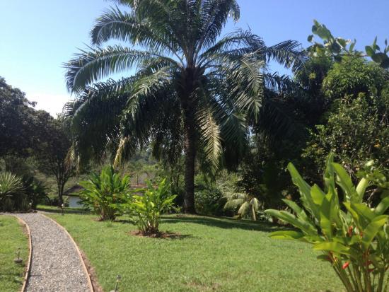 Diquis Del Sur : Garden