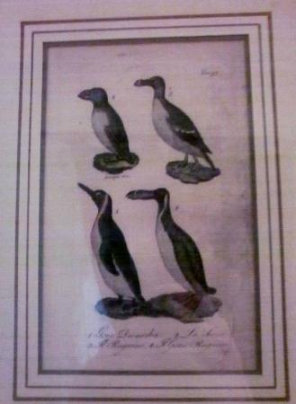 Albergo Morlacchi: Puffins and guillemots by the bed