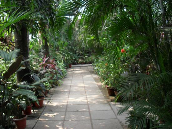 Palm Grove Cottages : Lovely gardens