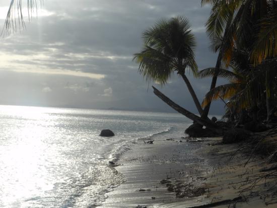 Green Beach: Palms