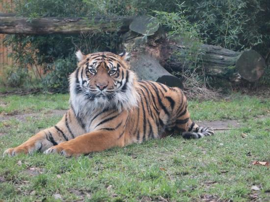 Wroclaw Zoo & Afrykarium: Wroclaw Zoo