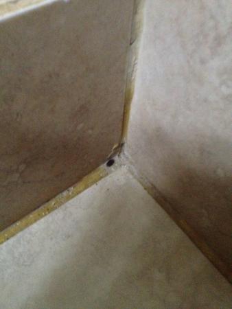 The Eco Hotel Arena Blanca: Scarafaggi in bagno