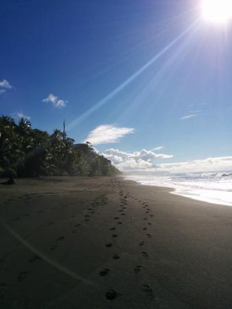 LagunaVista Villas Lodge: View from the beach