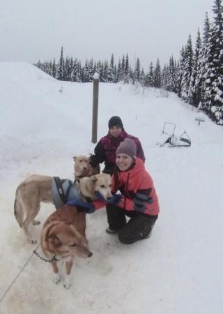 Mountain Man Dog Sled Adventures: Meeting the team!