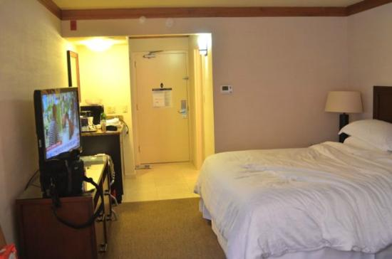 Sheraton La Jolla Hotel: Room
