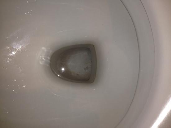 Hôtel Ours Blanc Wilson : Les toilettes