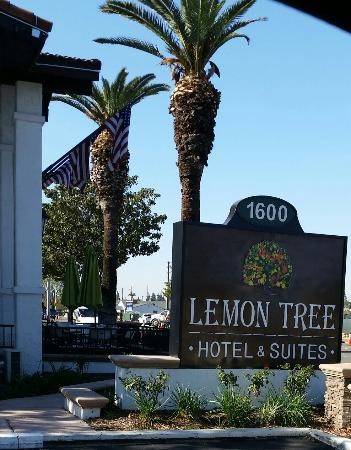 Lemon Tree Hotel and Suites: Great prices. Family/ pet friendly.