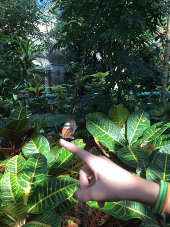 Museum of Life + Science: Butterfly landing spot