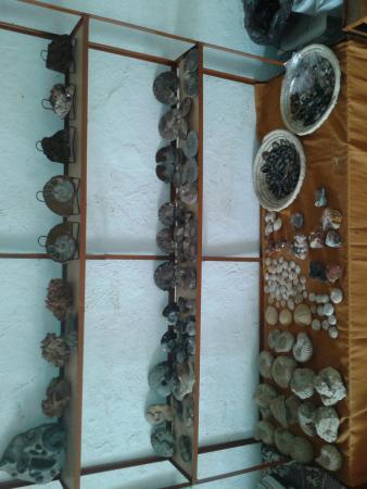 Driss Fossils & Minerals Shop: fossils shop merzouga