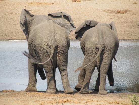 Extreme Nature Tours and Travel Day Tours: On safari to the Tembe Elephant Park, KZN South Africa