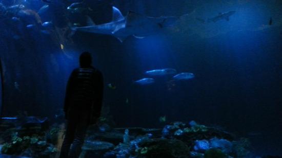 Parte Nueva Del Acuario Picture Of Shedd Aquarium
