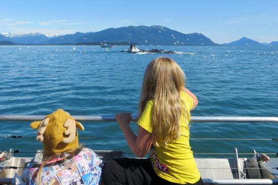 Weather Permitting Alaska - Whale Watching: Look!