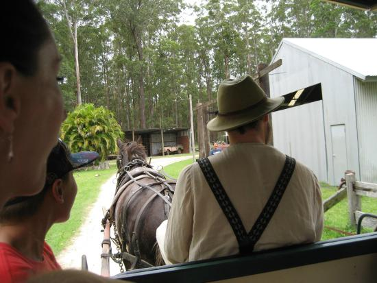 Timbertown Wauchope: Clydesdale carriage rider.