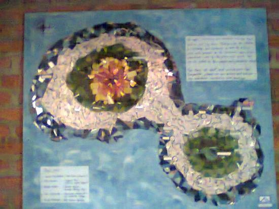 Cafe Campestre: Map of the island done with beer cans