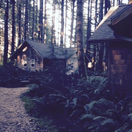 WildSpring Guest Habitat : WildSpring Cabins