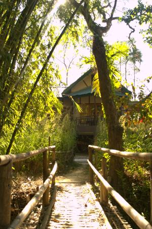 Infinity Resort Kaziranga: view of the cottage from the nature trail